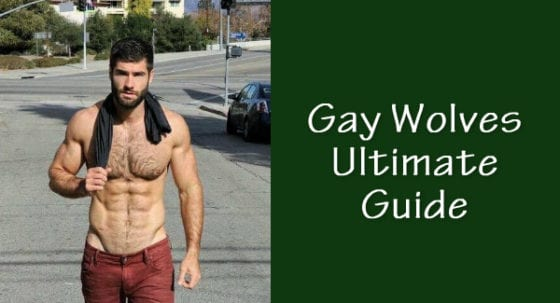 gay wolves