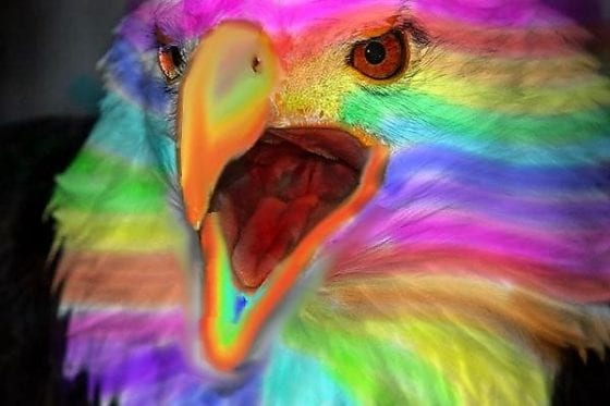 LGBT American Eagle