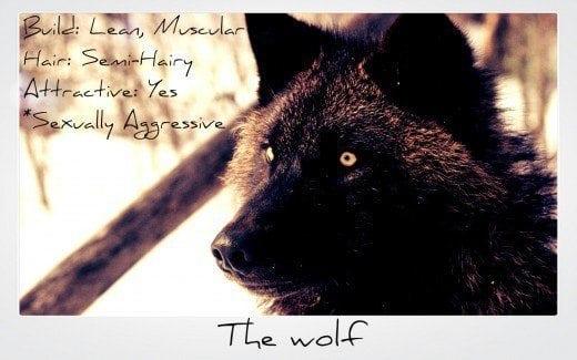 gay wolf